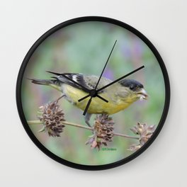 Lesser Goldfinch Snacks on Seeds Wall Clock