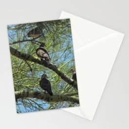 Doves in a Palo Verde Tree, Tucson, Arizona Stationery Cards