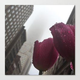 Empire Tulip Canvas Print