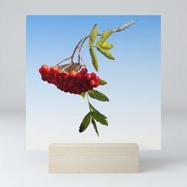Rowan Tree Branch Mini Art Print