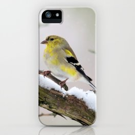 Balancing Act (American Goldfinch) iPhone Case