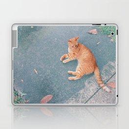 Cat Lounging Laptop & iPad Skin