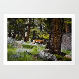 a rare siting in the woods  Art Print