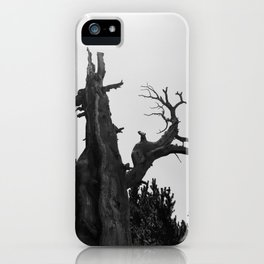 tree film iPhone Case