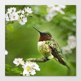 Hummingbird Flora Canvas Print
