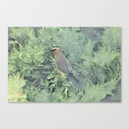 Cedar Waxwing Bird Canvas Print