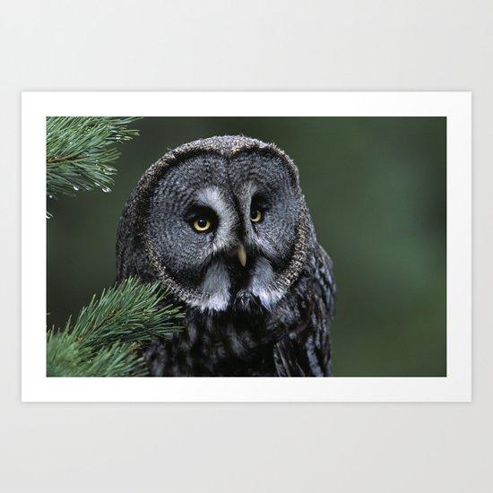 GREAT GREY OWL FACE Art Print
