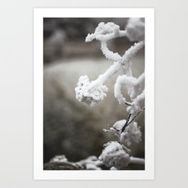 Frosted Flowers Art Print