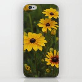 Black-Eyed Susans iPhone Skin