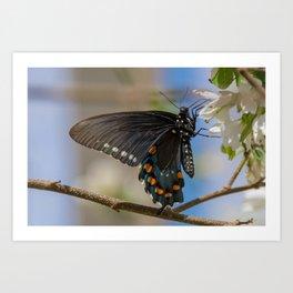 Pipeline Swallowtail Butterfly 1 Art Print