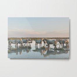Camargue Horses VIIII Metal Print