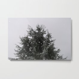 Pacific North West Pine Tree in The Snow Metal Print