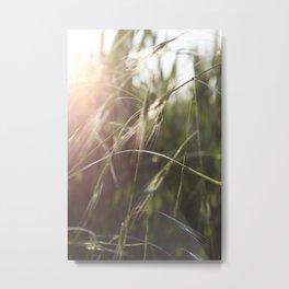 Sonnenschein Metal Print