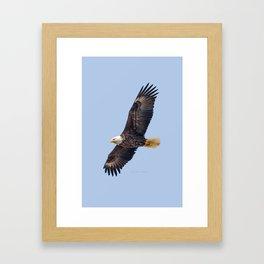 May Soaring Eagle Framed Art Print