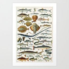 Vintage Illustration Fish Chart Kunstdrucke