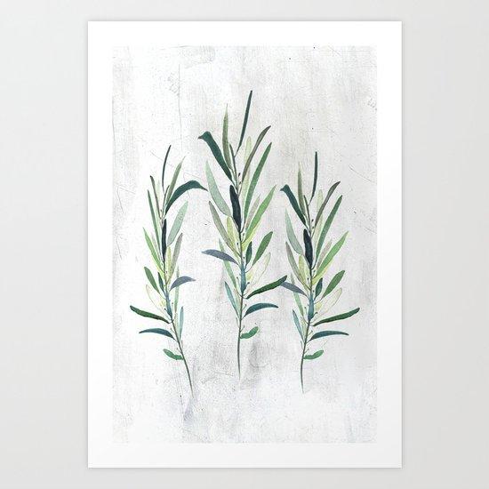 Eucalyptus Branches Art Print