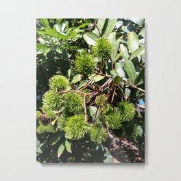 Tropical Fruit : Rambutan Metal Print