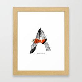 American Kestrel - NYC Birds Alphabet Framed Art Print
