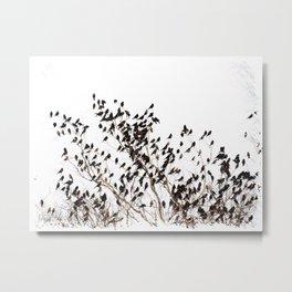 Settling Birds On a Tree  Metal Print
