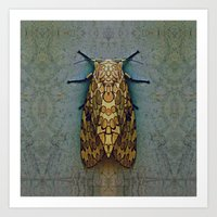 moth Art Prints featuring Moth by Zandonai