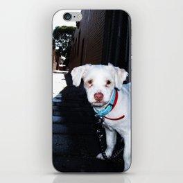 Alley Dog iPhone Skin