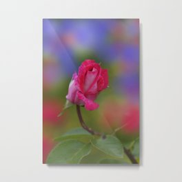 the beauty of a summerday -19 - Metal Print