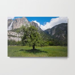Yosemite Valley Tree Metal Print