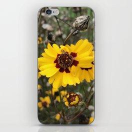 Wild Daises iPhone Skin