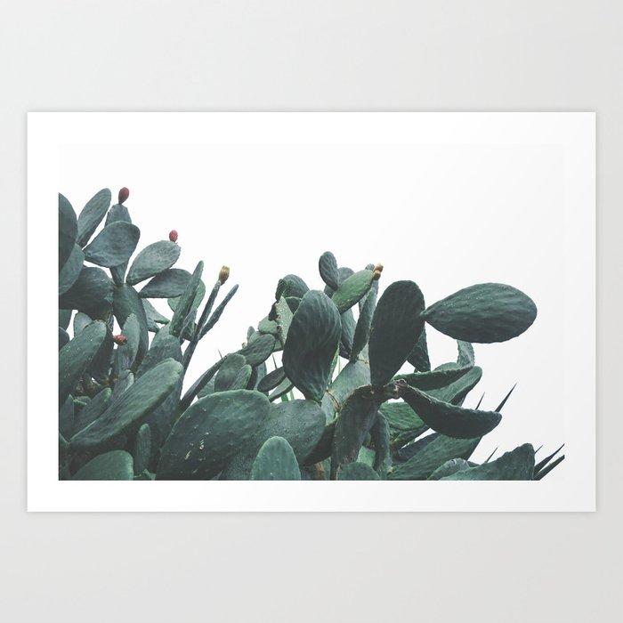 Fruit Cactus Desert Kunstdrucke