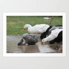 Attacking the Puddle Art Print