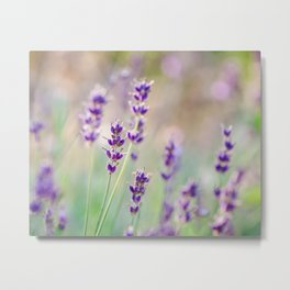 Lavender Daydream Metal Print