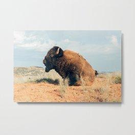 American Bison Metal Print
