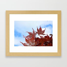 red leaf sky Framed Art Print