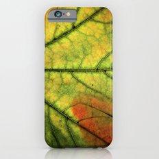 Fall Leaf II iPhone 6s Slim Case