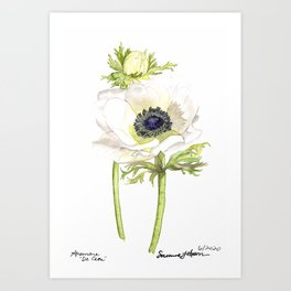 Anemone De Caen - Botanical Watercolor - Susanne Johnson art 2020 Art Print