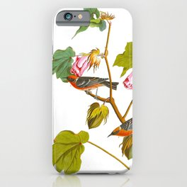 Bay-breasted Warbler Bird iPhone Case