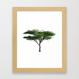 Acacia Tree Framed Art Print