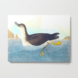 Manks Shearwater Bird Metal Print