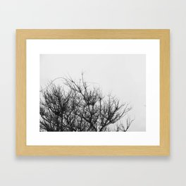 tree #1 Framed Art Print
