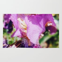 Purple Striped Bearded Iris Rug