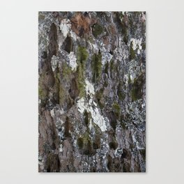 Old tree with character Canvas Print