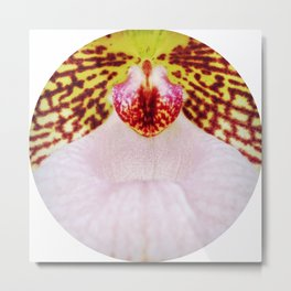Into Orchid Metal Print