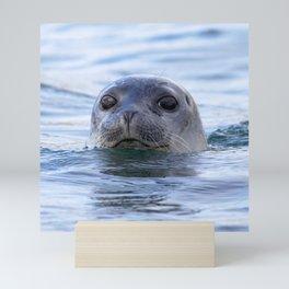 Watercolor Harbor Seal 18, Reykjarfjörður Iceland Mini Art Print