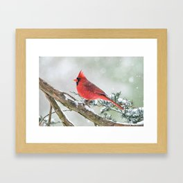 Cardinal Holding Steady in the Storm Framed Art Print