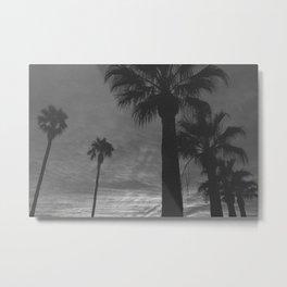 Palm Trees Black and White Metal Print