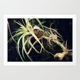 Epiphyte Art Print