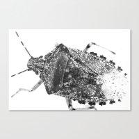 beetle Canvas Prints featuring beetle by Falko Follert Art-FF77