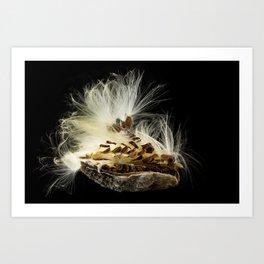 Seeds flying from Swamp Milkweed seed pod Art Print