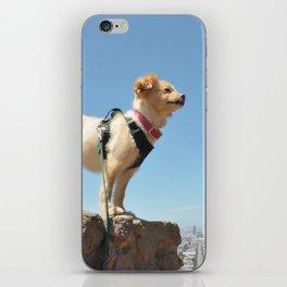 Wonder Dog in San Francisco iPhone Skin