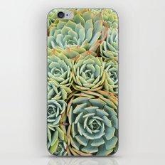Succulentville iPhone & iPod Skin